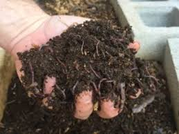 Why not try vermicomposting